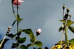 natura_032-7.5x11-P1020860-a